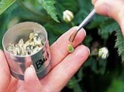 دانلود پاورپوینت روشهای بیوتکنولوژی اصلاح گیاهان دارویی